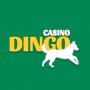 приложение для Casino Dingo